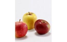 Pomme mélange à croquer