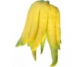 Citron Main de Boudha