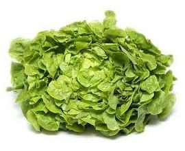 Salade Feuille de chêne Blonde