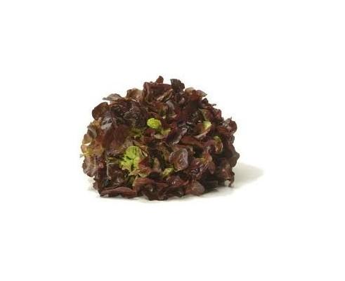 Salade Feuille de chêne Brune